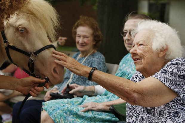 Equine therapy is also a very effective healing method for the elderly