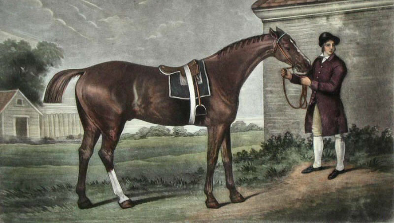 horse-therapy-history-1.jpg