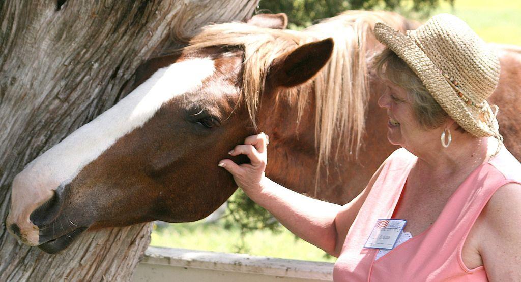 horse-therapy-elderly.jpg