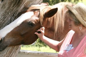 Equine Therapy for the Elderly