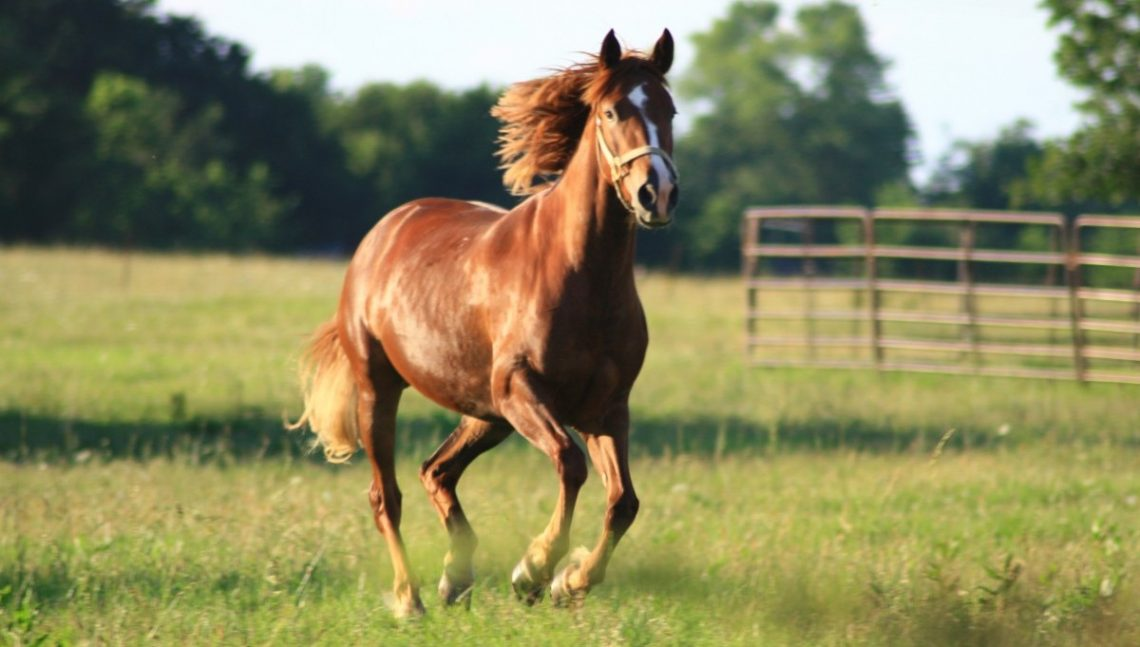 Equestrian therapy is a form of therapy that makes use of horses to help promote emotional growth.